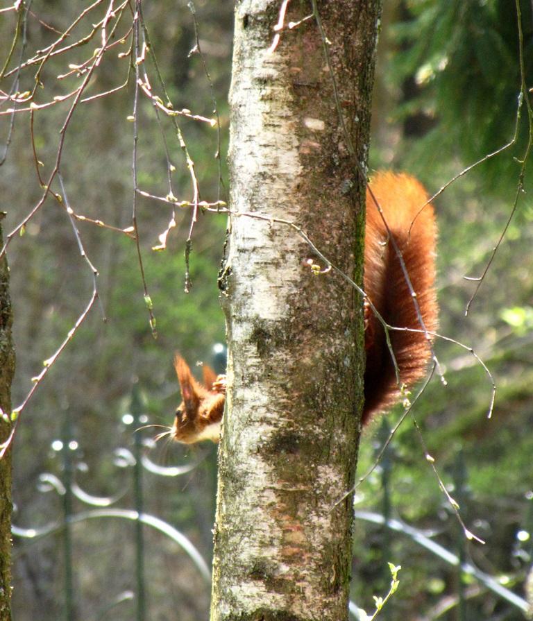 ecureuils ,castors,rongeurs,chauve souris