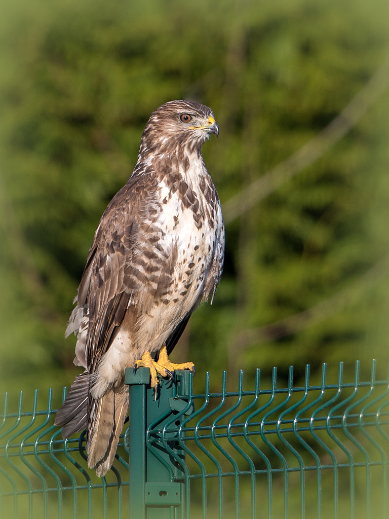 buse variable D81_7709