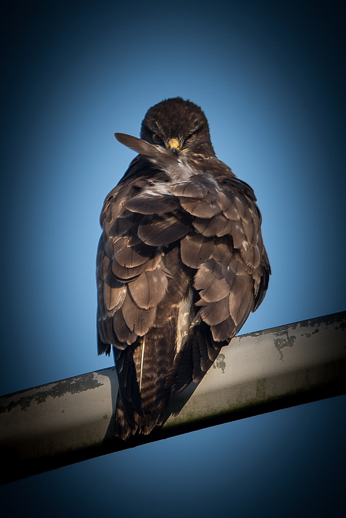 buse variable D81_8132