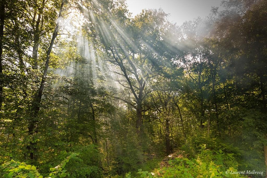 brume en sous bois D82_0875