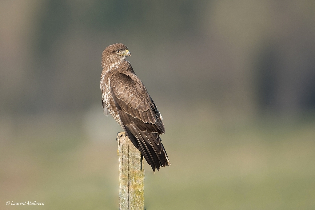 buse variable D82_4050