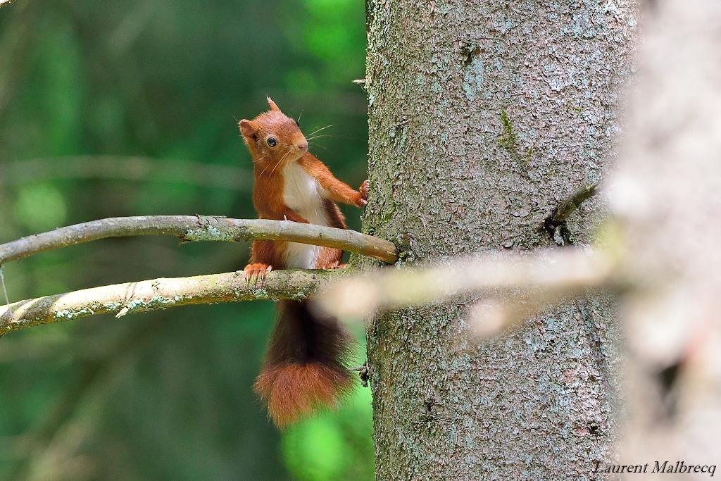 ecureuil interrogatif