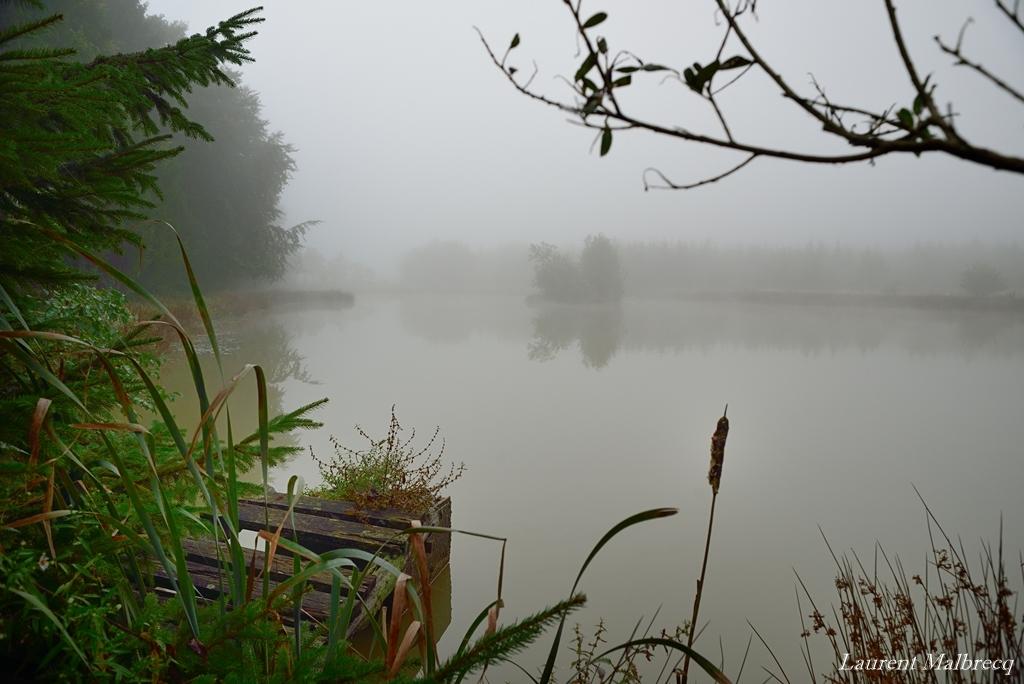 etang de brume matinale DSC_3582