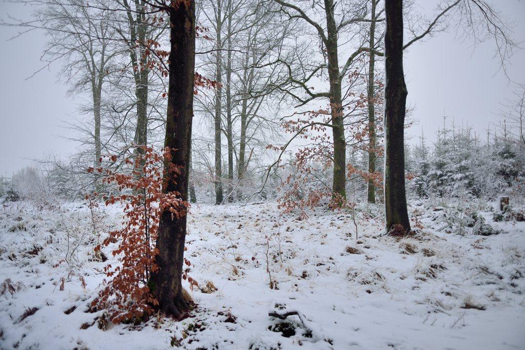 neige DSC_5586