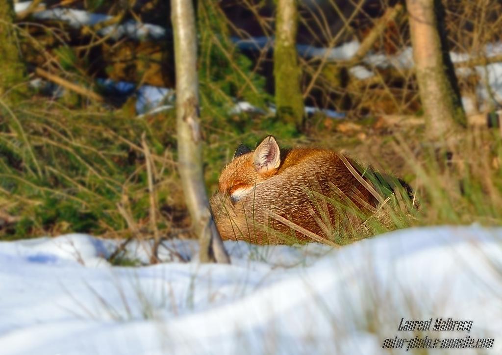 la sieste au soleil d'hiver