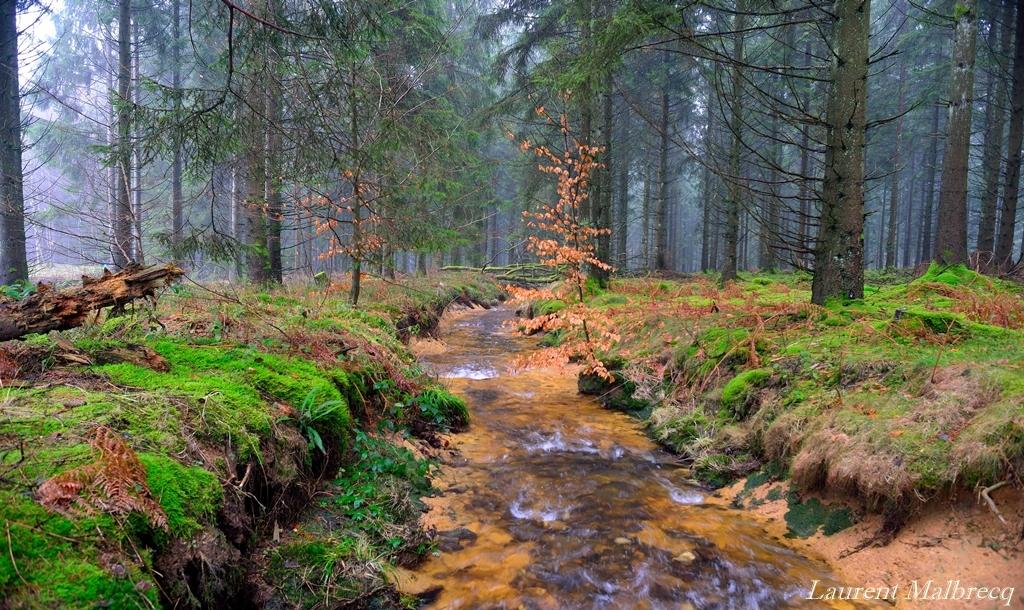riviere forestiere 1