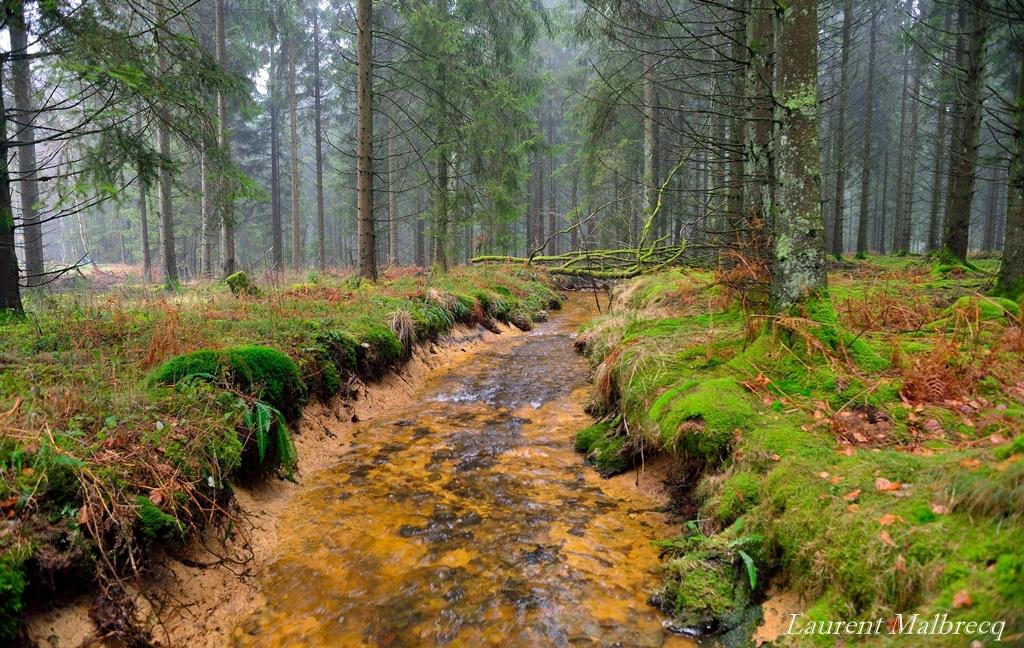 riviere forestiere 2