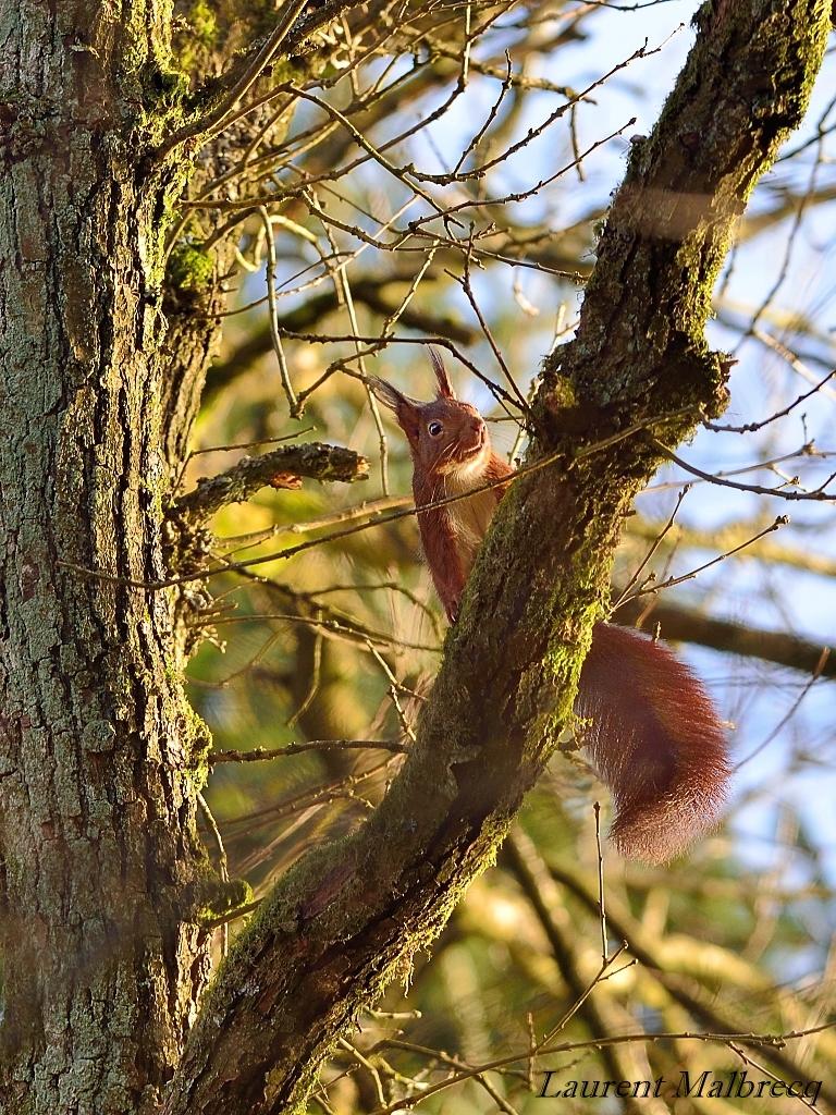 ecureuil curieux 2