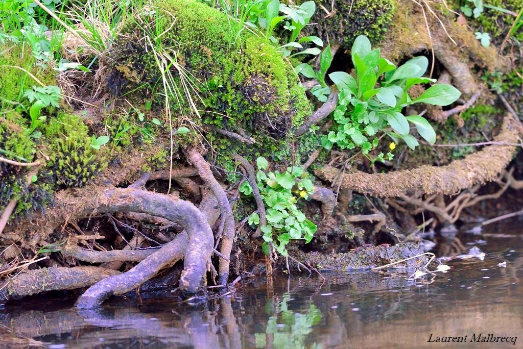 bord de riviere 1