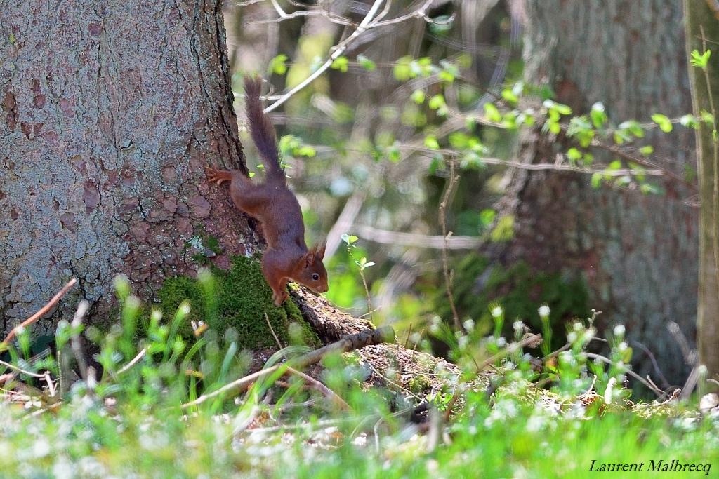 ecureuil fin avril 1
