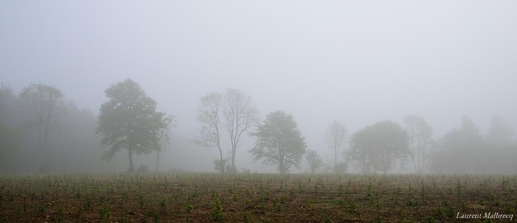 l'ombre des arbres dans la brume
