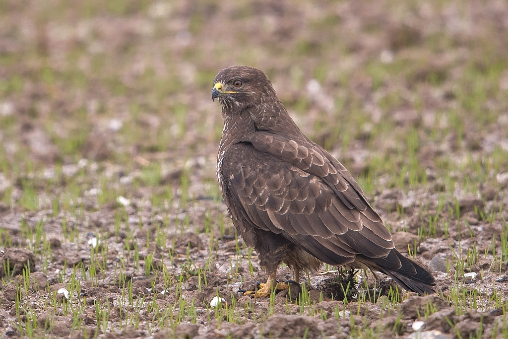 buse variable DX5_1021