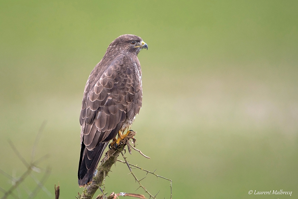 buse variable  DX5_4783