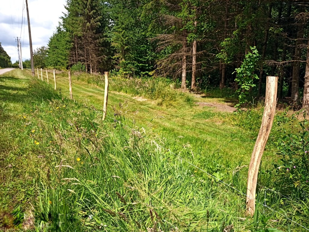 clôture acacia et pause du fil