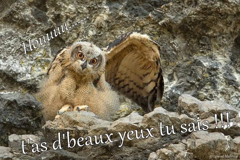 tu as de beaux yeux tu sais ! DX5_3989 - Copie