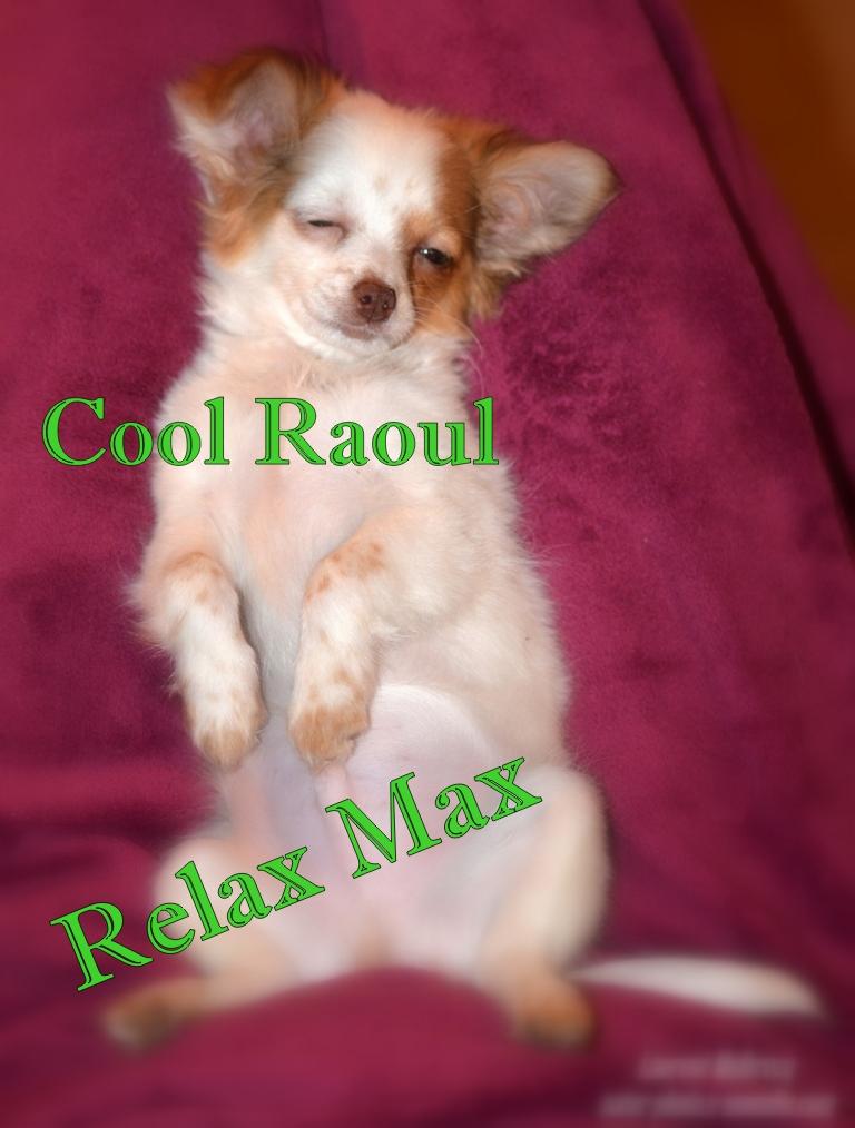 cool Raoul