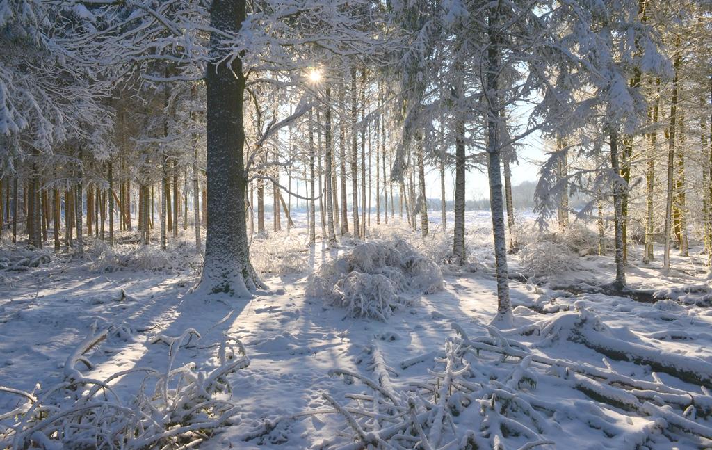 sous bois sous la neige
